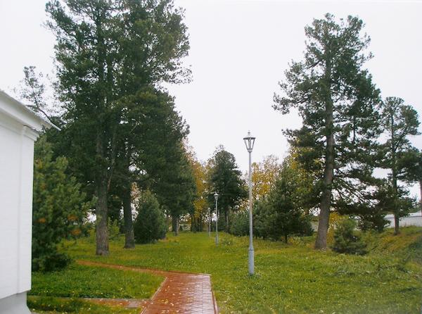 Кедровая роща в Толгском монастыре (г.Ярославль), заложенная в ХVI веке.